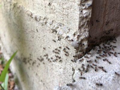 Hubení mravenců 4