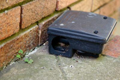 jak se zbavit myší na zahradě