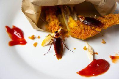 jak vypadá šváb 2