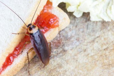 švábi v bytě