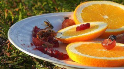 Škůdci - vosy