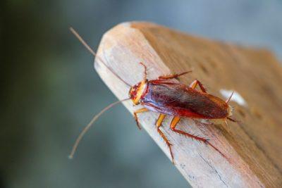 Hubení švábů