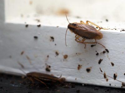 šváb v byte