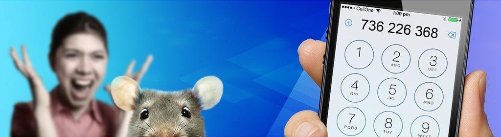 Hubení potkanů kontakt