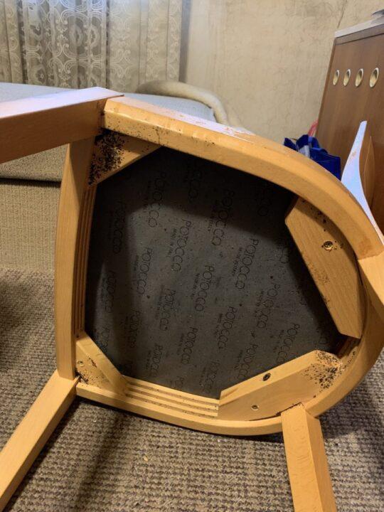 03: štěnice na židli