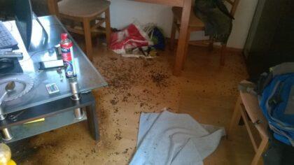 Sanaci bytu po zemřelém provádíme v Praze a okolí.