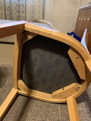 štěnice na židli