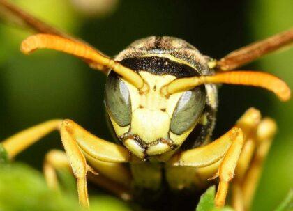 Pomůžeme vám skoncovat s létajícím hmyzem