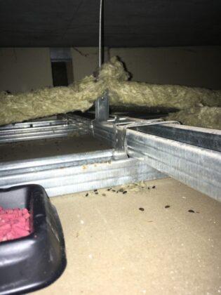 Likvidace potkanů v podhledu