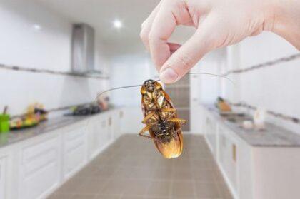 Likvidace švábů
