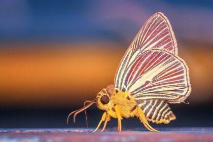 Na létající hmyz můžete narazit kdekoli