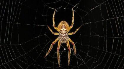 Hubení pavouků