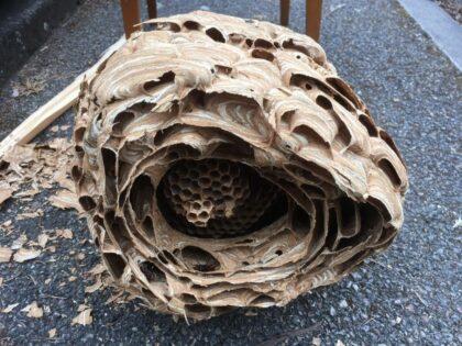 Sršní hnízdo detail